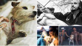 Los famosos y sus perros
