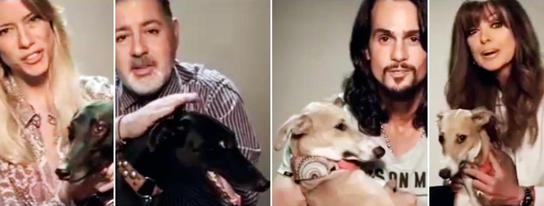 #STOPGALGUEROS: la conmovedora campaña de los famosos contra las carreras de perros