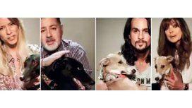 #StopGalgueros: la campaña de los famosos contra las carreras de perros