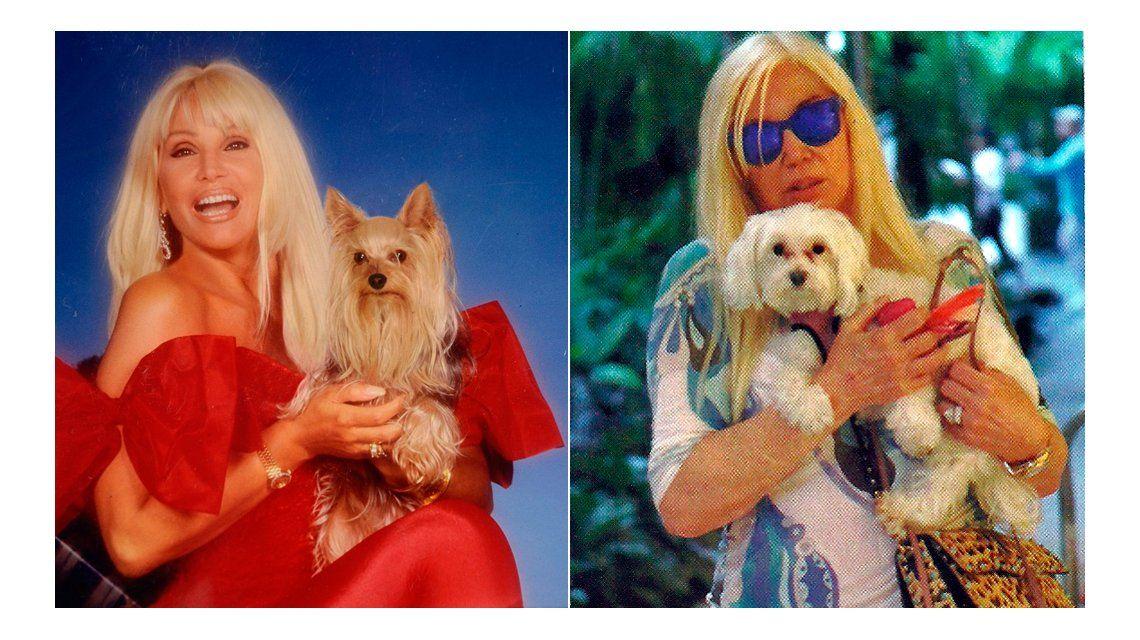 Para no extrañar a Jazmín, Susana Giménez pidió prestado un perro en Miami