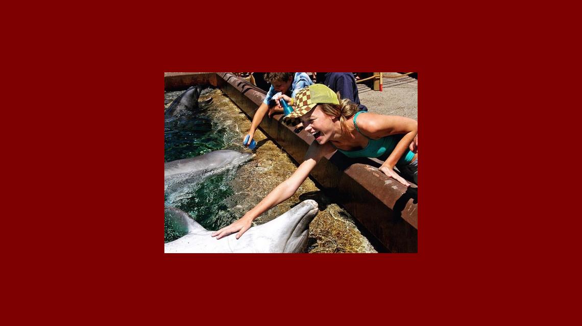 La foto de Brie Larson con un delfín que provocó indignación en Instagram: ¿qué dijo ella?