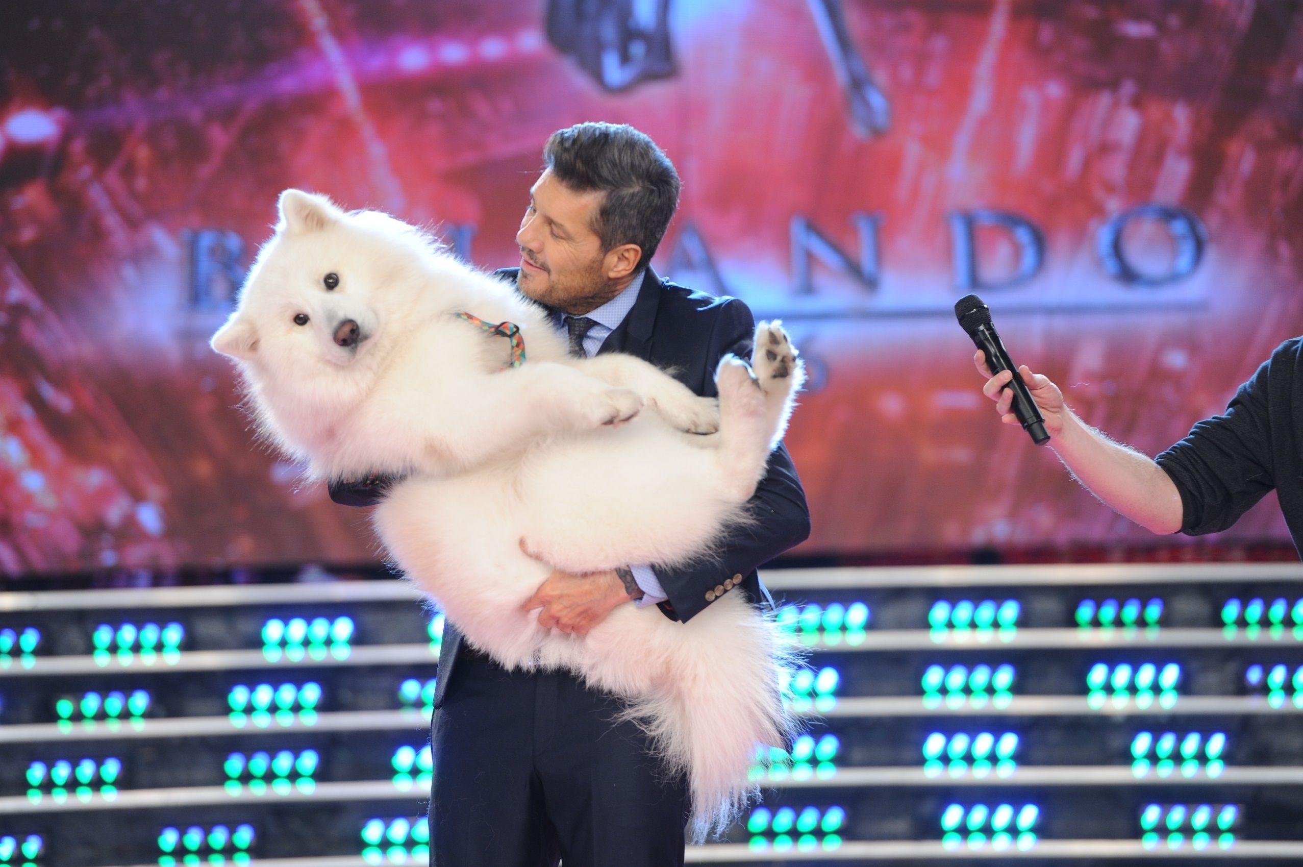 El show de Marcelo Tinelli con el perro de Flavio Mendoza, que debutó como jurado