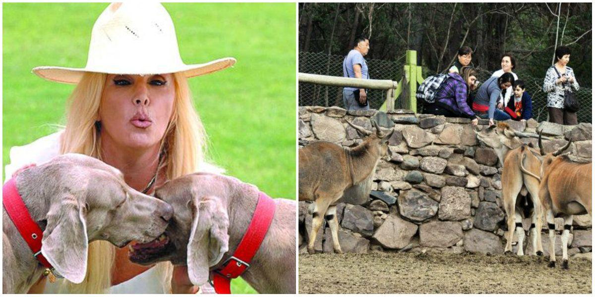 Susana Giménez reclama por el zoológico de Mendoza: No se puede ver sufrir así a los animales