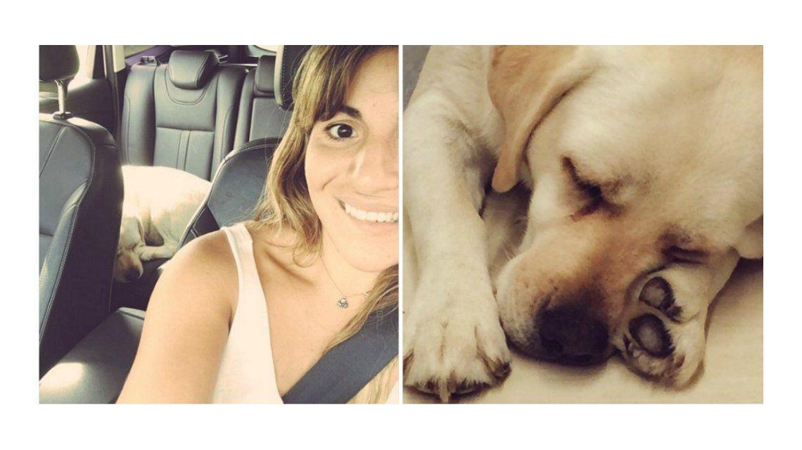El dolor y la furia de Gianinna Maradona porque atropellaron y mataron a su perra: HDP, deseo que toda tu vida te acuerdes de ella