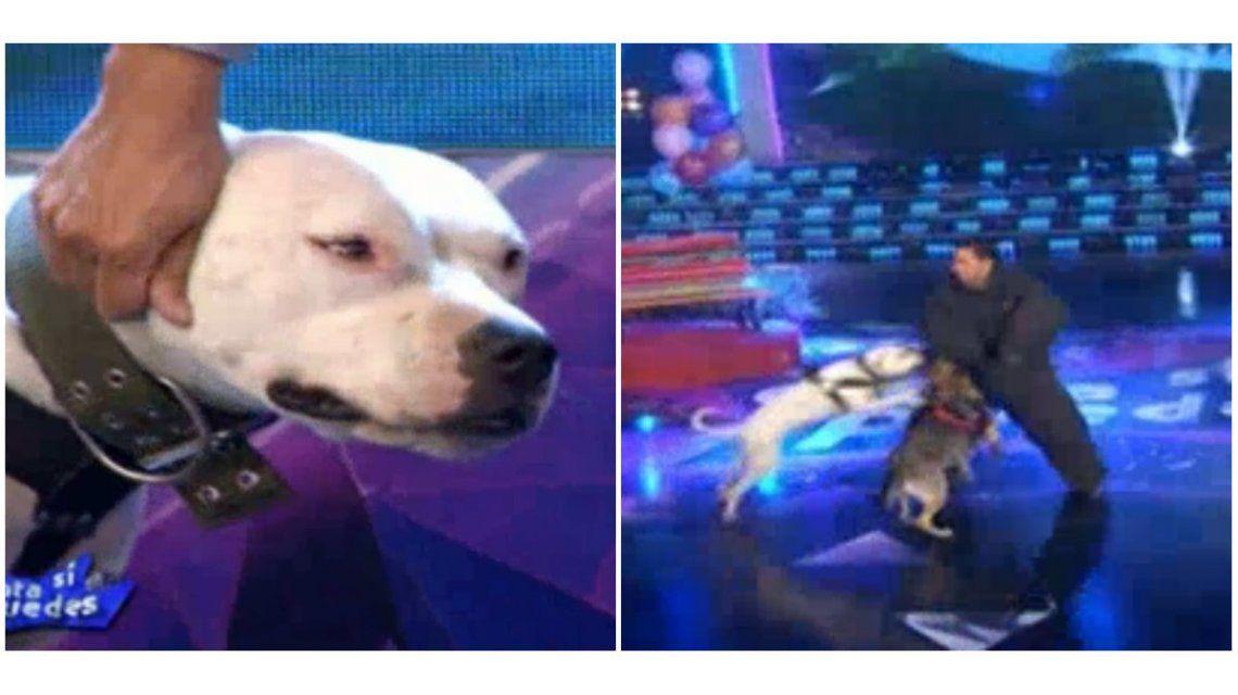El nuevo desafío de Canta si puedes: ¡perros al ataque contra el concursante!