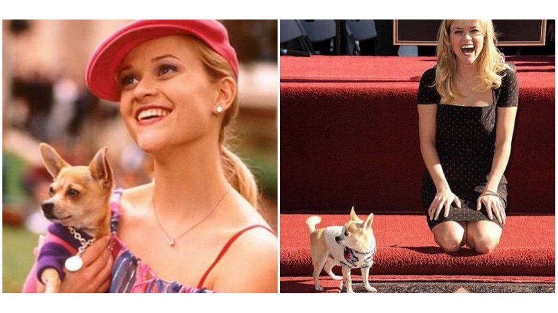 Reese Witherspoon despidió al perro de Legalmente rubia: Nunca olvidaré todos esos días que pasamos juntos