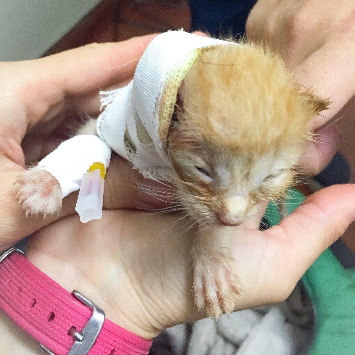 El triste momento de Robertito Funes: murió la gatita que había rescatado de la basura