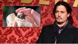 El raro gusto de Johnny Depp: adoptó a un murciélago bebé