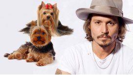 Johnny Deep, en problemas por sus perros: Si no se  los lleva vamos a sacrificarlos