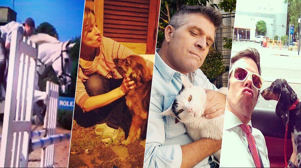 El Día del Animal: las tiernas fotos de los periodistas de C5N con sus mascotas