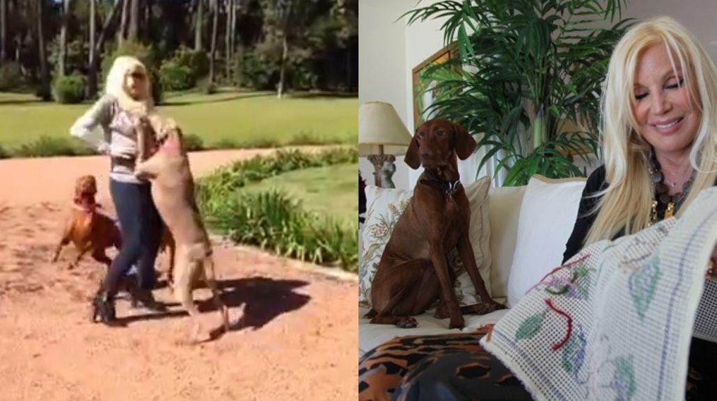 A Susana los perros se le tiran encima, pero son más y ella los doma con un palito