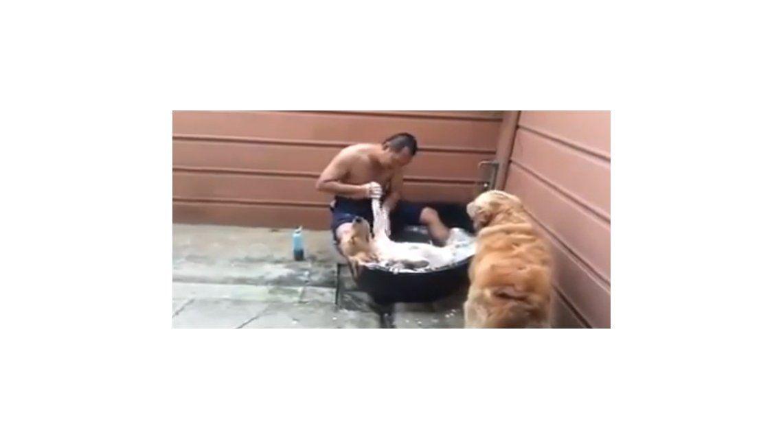 Relax absoluto: un perro disfruta de su baño de espumas