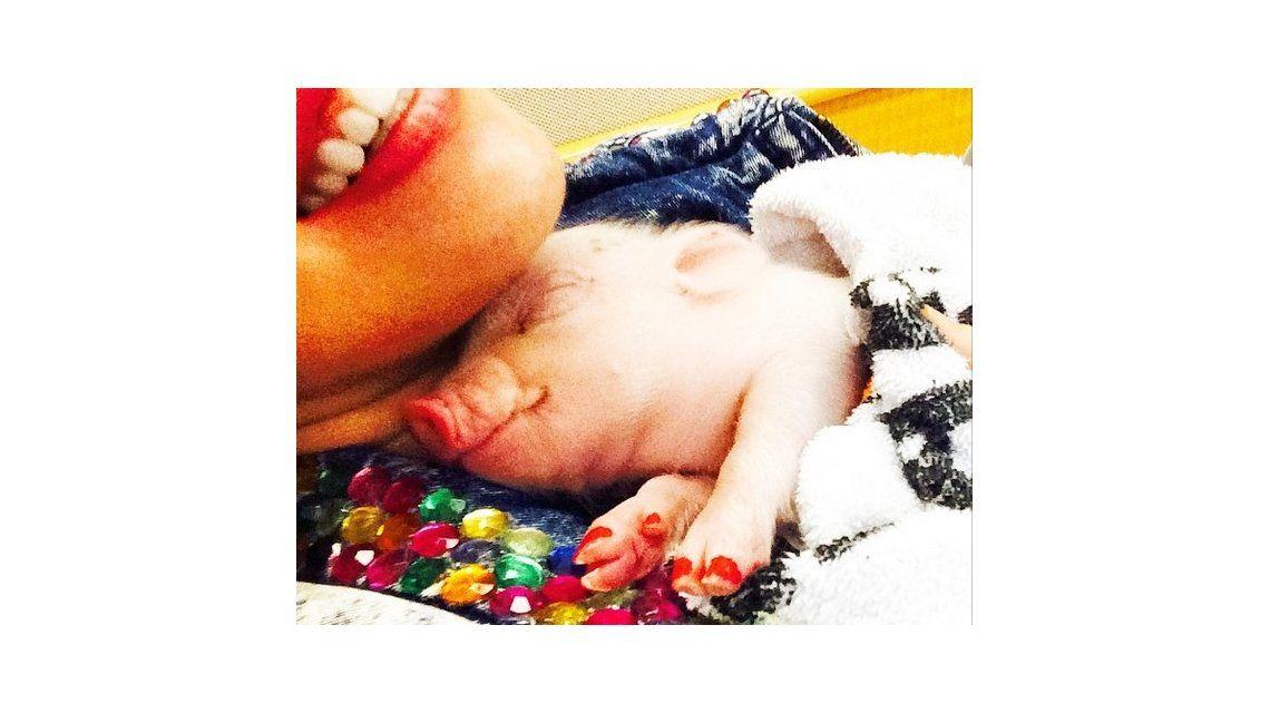 Miley Cyrus le pinta las uñas a su extraña mascota