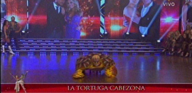 Tinelli presentó a la tortuga cabezona: adivina resultados del Mundial
