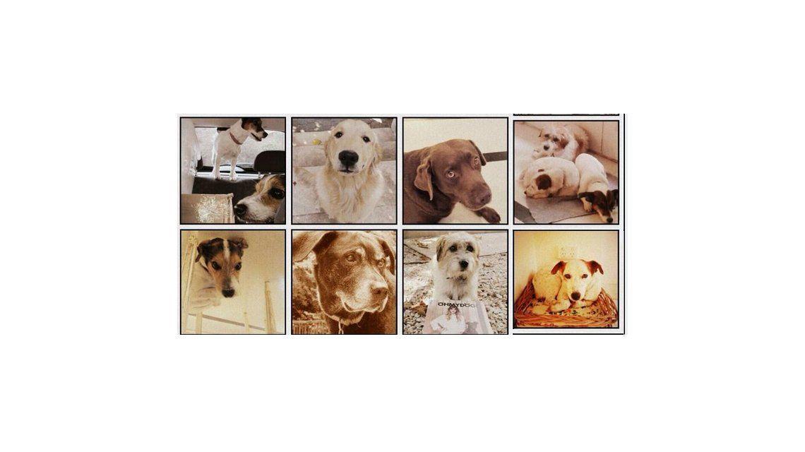 Los famosos homenajearon a sus mascotas en el Día del Animal