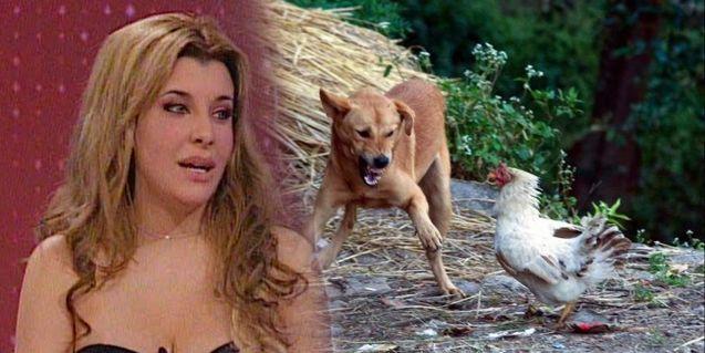 ¿Charlotte, bruja? Corríamos a la gallina con el perro