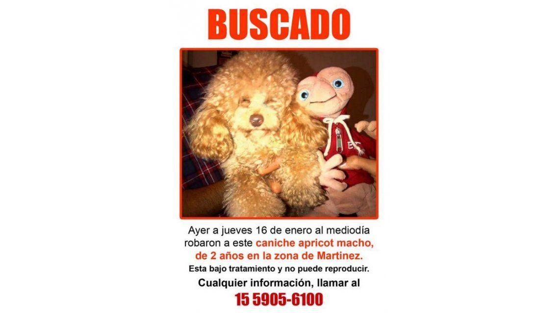 El misterioso caso del perro perdido de Cinthia Fernández: lágrimas en vivo