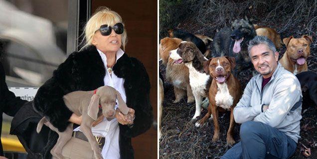 Susana manda a su perra Thelma a terapia con Millán, el encantador de perros