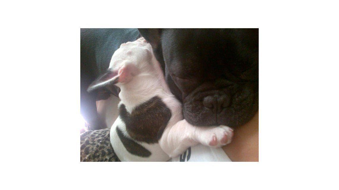 Paula y Peter muestran el reality de su cachorrita Renata en Twitter
