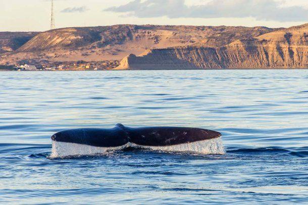 La temporada de ballenas comenzará en mayo. Foto: Emanuel Pistara Fotografía.