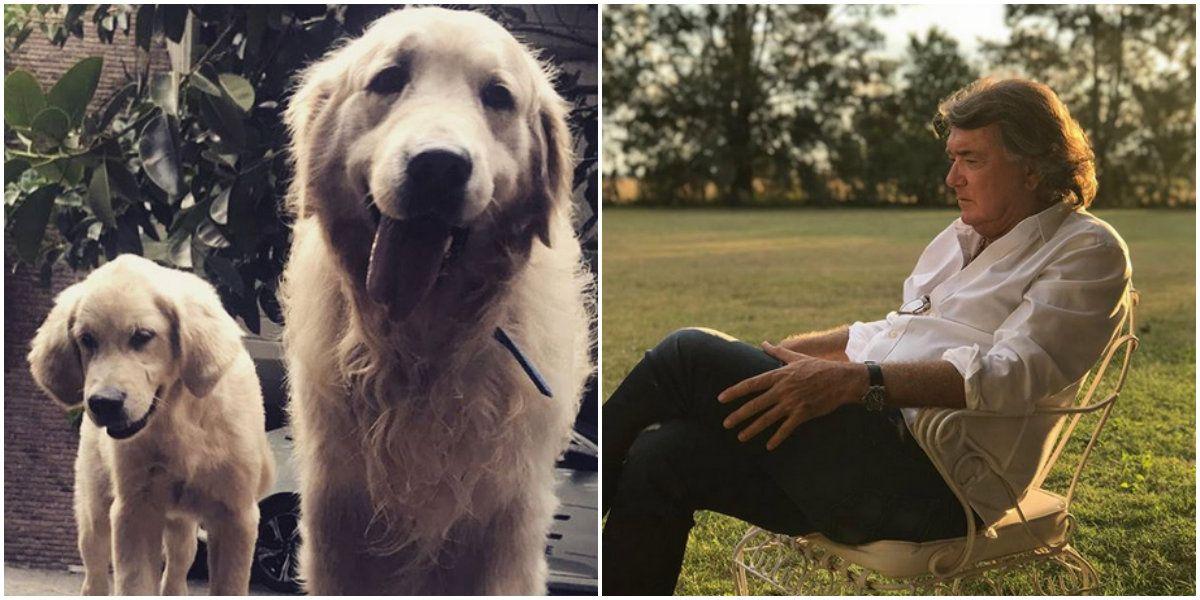 El desesperado pedido de Pancho Dotto: hace diez días que no sabe nada de sus perros