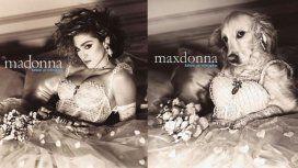 Maxdonna: un perro recreó las fotos más icónicas de Madonna