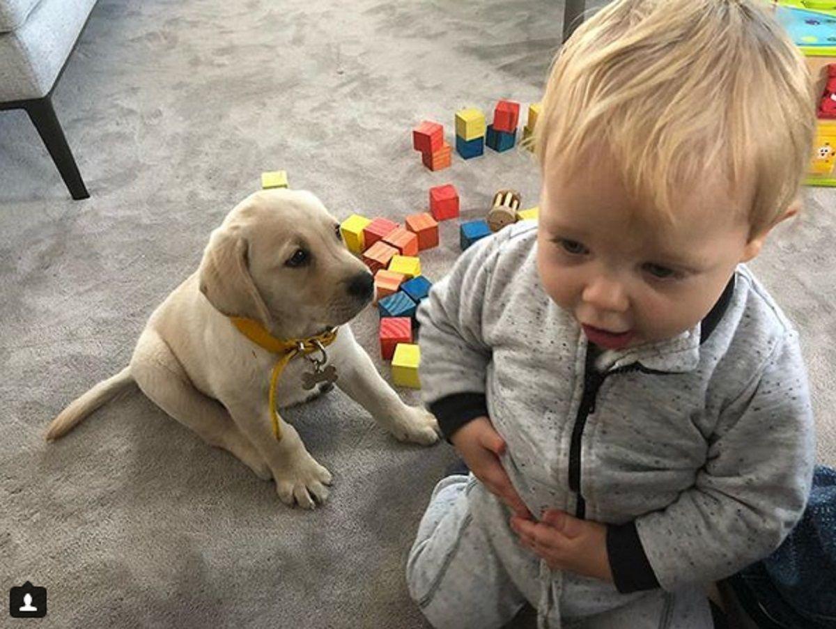 La nueva estrella de las redes: Bailey, el perro de Mirko