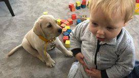 La nueva estrella de las redes: el perro de Mirko