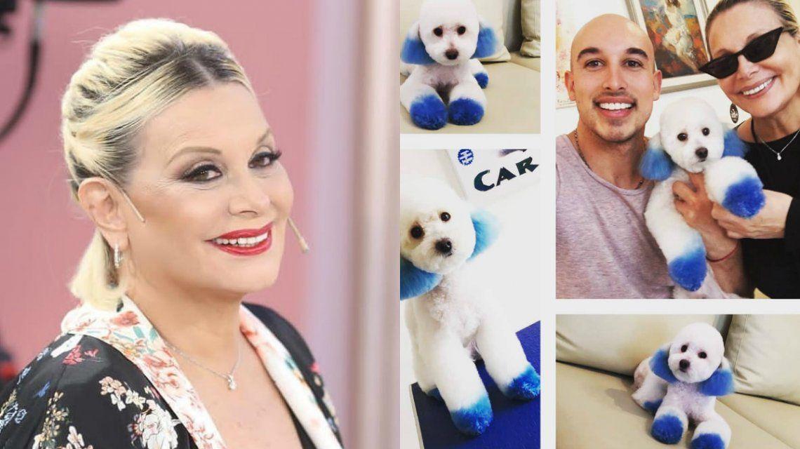 Carmen Barbieri respondió a las acusaciones de maltrato animal tras teñir a su perrito