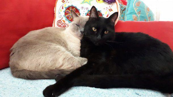 Mateo (izquierda) y Lorenzo (derecha), inseparables.
