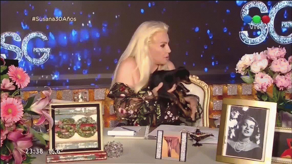 Un cachorrito le hizo caca en el vestido a Susana Giménez